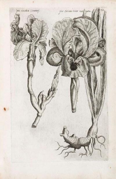 SWEERT, Emanuel (1552-1612). F