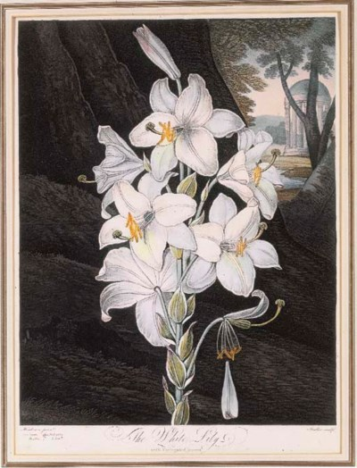 Robert John Thornton (1768-186