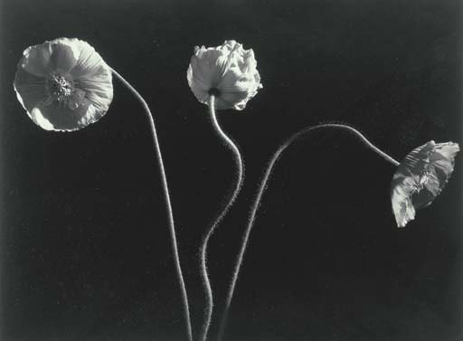 HORST P. HORST (1906-1999)