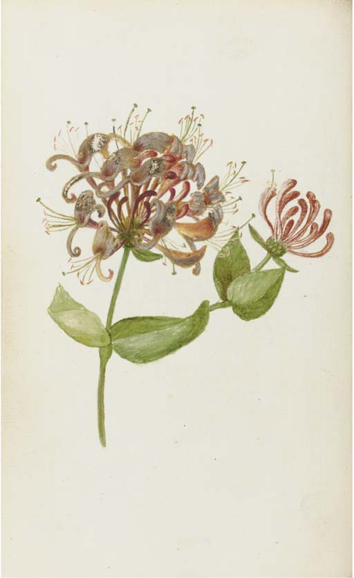 WITHERING, William (1741-99).