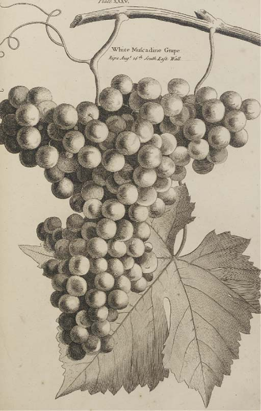 LANGLEY, Batty (1696-1751).  P