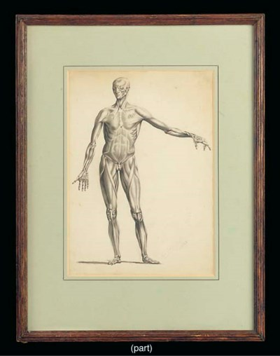 Seven 19th-Century anatomical