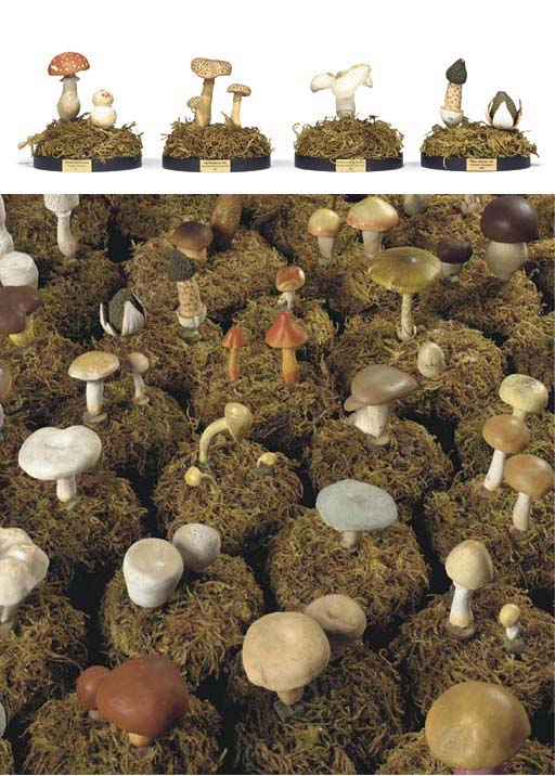 A collection of scientific plaster mushroom, toadstool and fungi specimen models