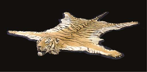 An Indian tiger skin