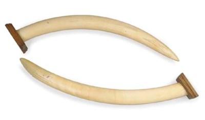 A pair of elephant ivory tusks