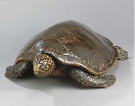 A STUFFED TURTLE