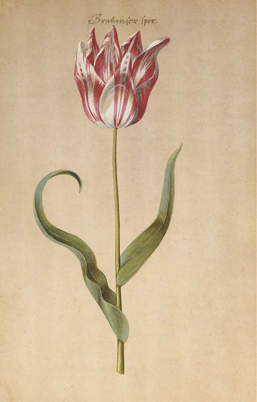 Attribué à Pieter van Loo (1731-1784)