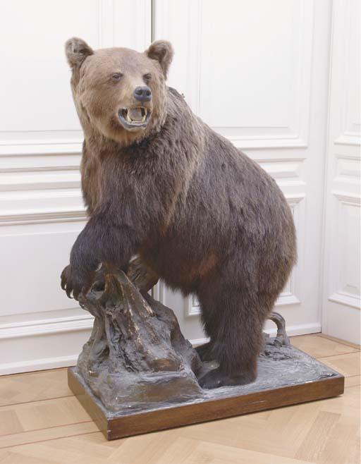 A STUFFED BROWN BEAR