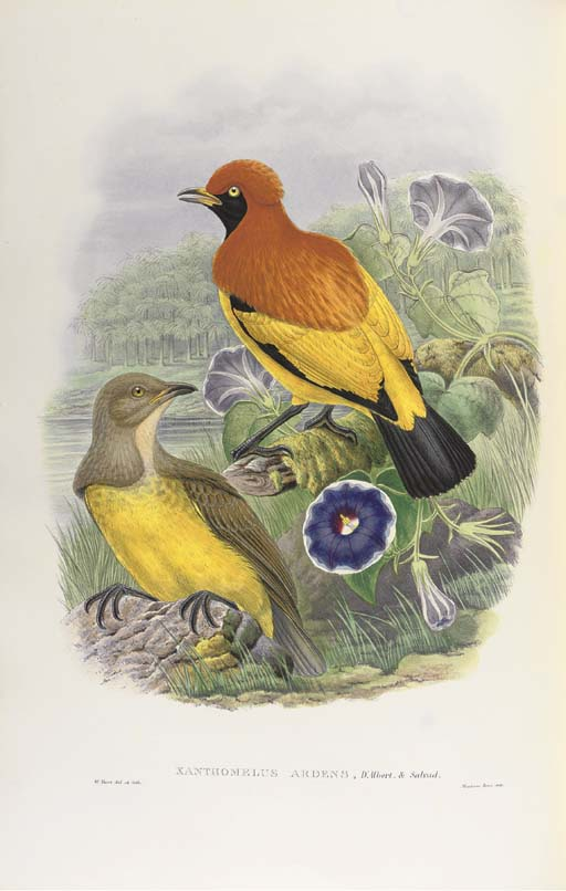 SHARPE, Richard Bowdler (1847-1909). Monograph of the Paradiseidae, or Birds of Paradise, and Ptilonorhynchidae, or Bower-Birds. London: Taylor and Francis for Henry Sotheran, 1891-1898.