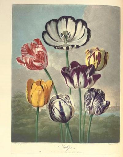 THORNTON, Robert John (1768-18