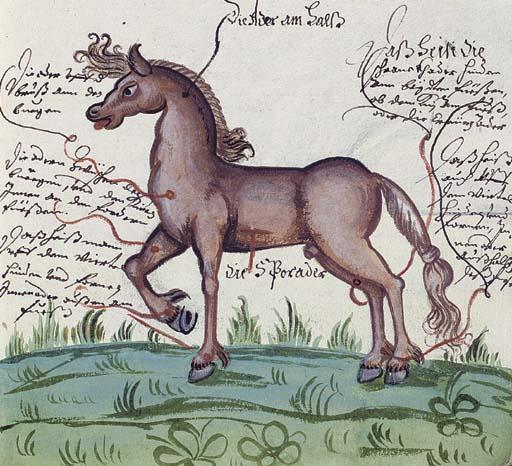 EQUESTRIANISM. Manuscript on p