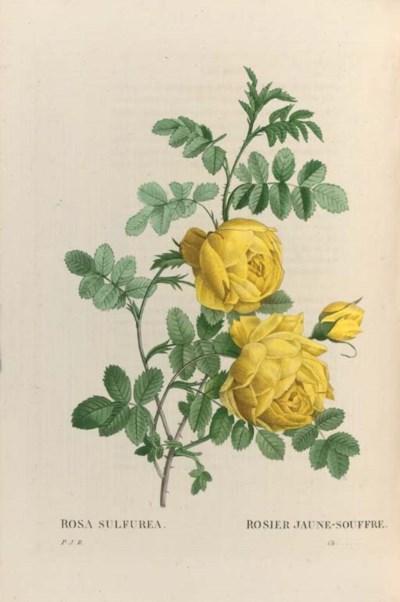 REDOUTE, Pierre Joseph (1759-1