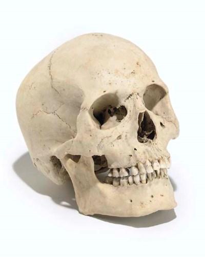 A human skull,