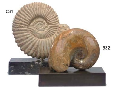AN AMMONITE ON STAND