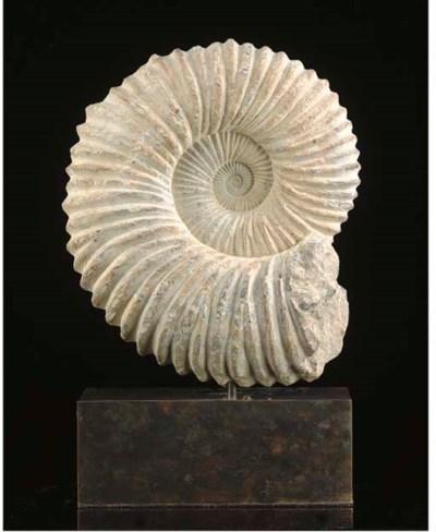 A large limestone Prochelonice