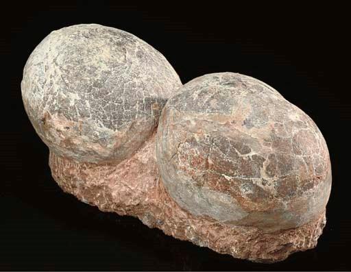 A good pair of Hadrosaur eggs,