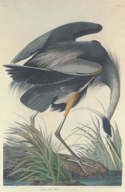 AFTER JOHN JAMES AUDUBON BY RO