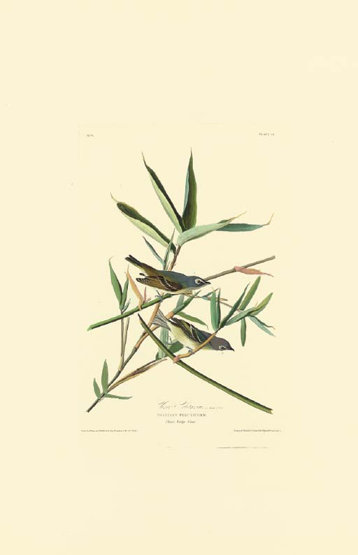 AFTER JOHN JAMES AUDUBON (1785