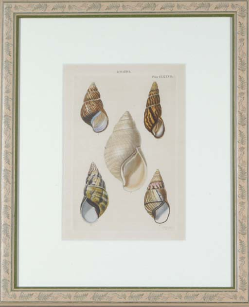 Lovell Augustus Reeve (Active Mid-Nineteenth Century)
