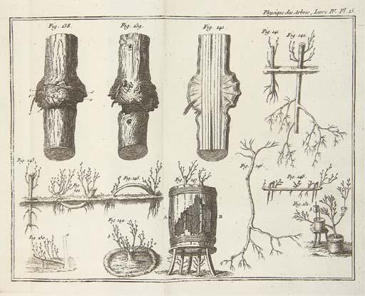DUHAMEL DU MONCEAU, Henri (1700-1781?). La Physique des arbres; où il est traité de l'anatomie des plantes et de l'économie végétale: pour servir d'introduction au traité complet des Bois & des Forests. Paris: Guerin & Delatour, 1758.