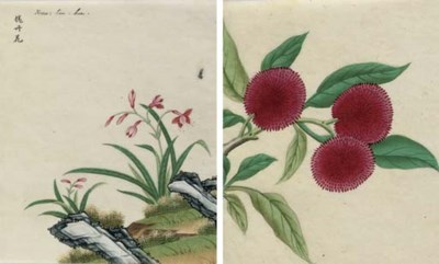 A COLLECTION OF CHINESE BOTANI