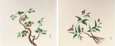 A set of twelve botanical wate