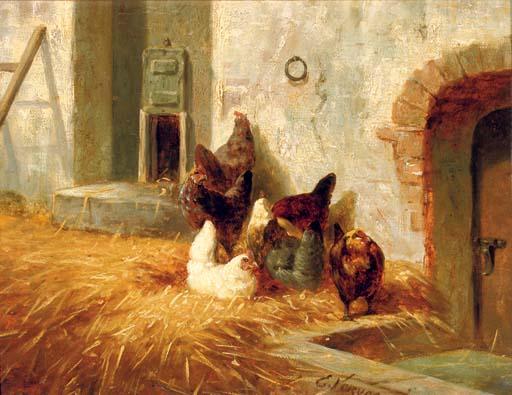 Hens outside their pen