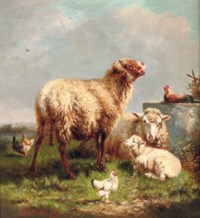 Sheep and chickens in a pasture