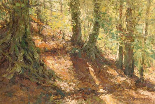 In a sunlit forest