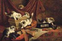 Playing kittens