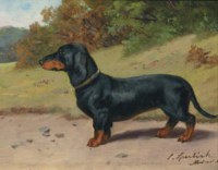 The Dachshund