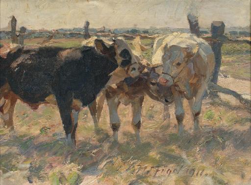 Kühe auf der weide: out in the pasture