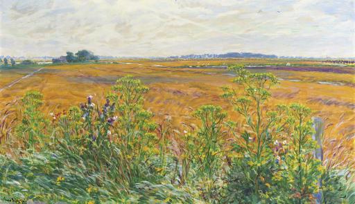 Landscape in Groningen