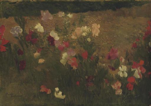 A field of sweetpea