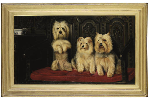 Three Terriers on a red sofa