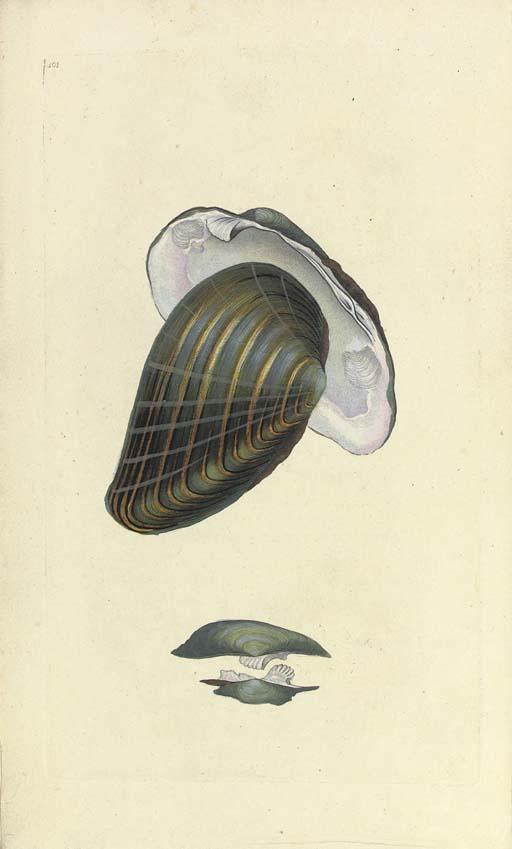 DONOVAN, Edward (1768-1837). T
