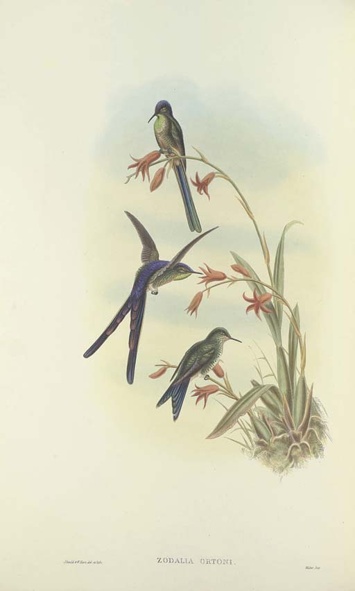 GOULD, John (1804-1881) and Richard Bowdler SHARPE (1847-1909). A Monograph of the Trochilidae or Family of Humming-Birds ... completed after the author's death by R. Bowdler Sharpe. Supplement. London: Taylor and Francis for Henry Sotheran & Co., [1880]-1887.