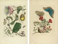 MERIAN, Maria Sibylla. Dissertatio de generatione et metamorphosibus insectorum Surinamensium. Dissertation sur la Generation et les Transformations des Insectes de Surinam, French translation by 'Jean Rousset de Missy' [i.e. Baron Ivan Nestesuranoi]. The Hague: Pierre Gosse, 1726.