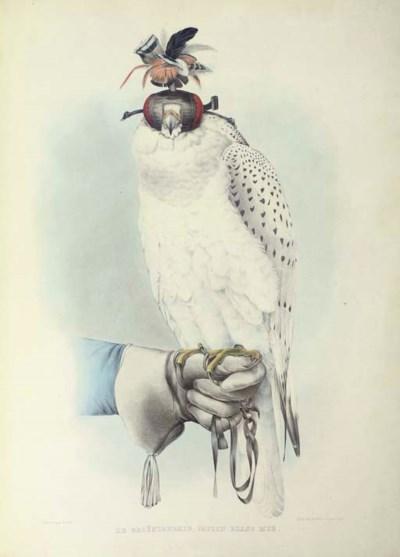 SCHLEGEL, Herman (1804-1884) a