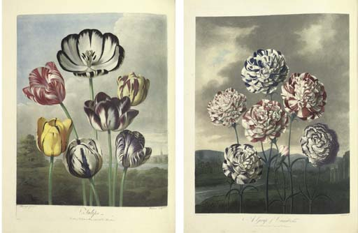 THORNTON, Robert John (1768-1837). Picturesque Botanical Plates of the New Illustration of the Sexual System of Linnaeus. London: for the publisher, 1799.