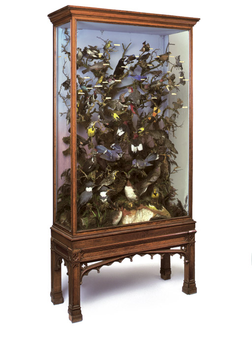 A REGENCY OAK DISPLAY CABINET-ON-STAND ENCLOSING A VICTORIAN DISPLAY OF STUFFED BIRDS