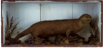 A VICTORIAN TAXIDERMY MODEL OF