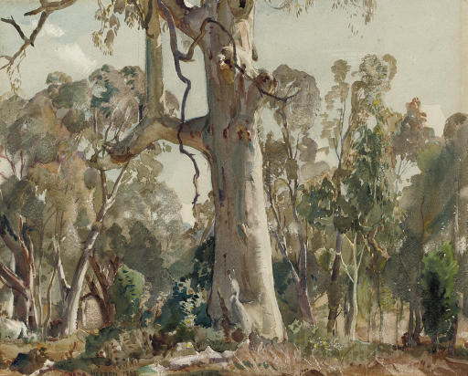 The Gum Tree