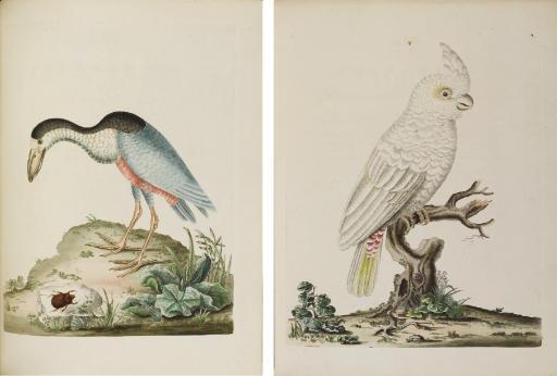BROWN, Peter (fl.1776). New Il