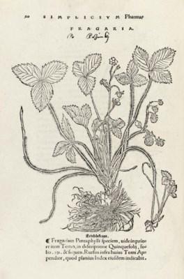 BRUNFELS, Otto (c.1488-1534).