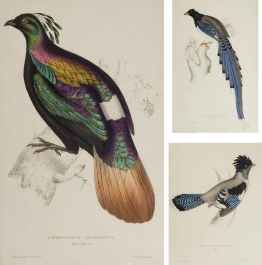 GOULD, John (1804-1881) and Ni