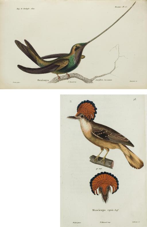 [Magasin de Zoologie: Oiseaux.