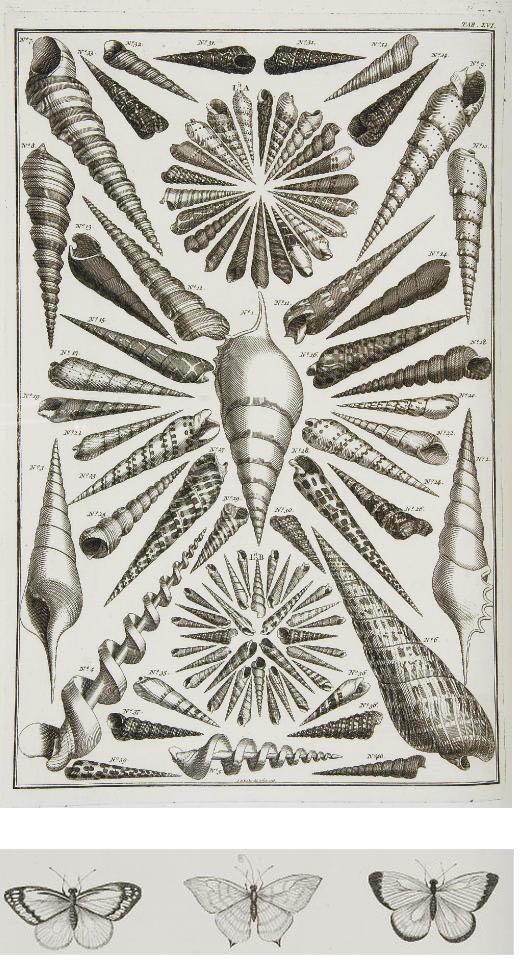 SEBA, Albert (1665-1736). Locu