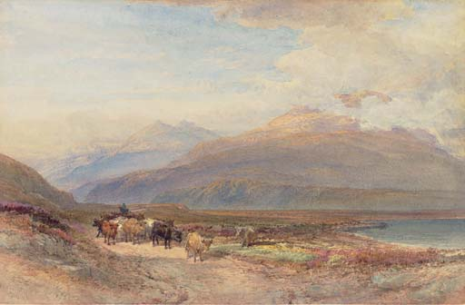 Droving cattle in the Scottish highlands