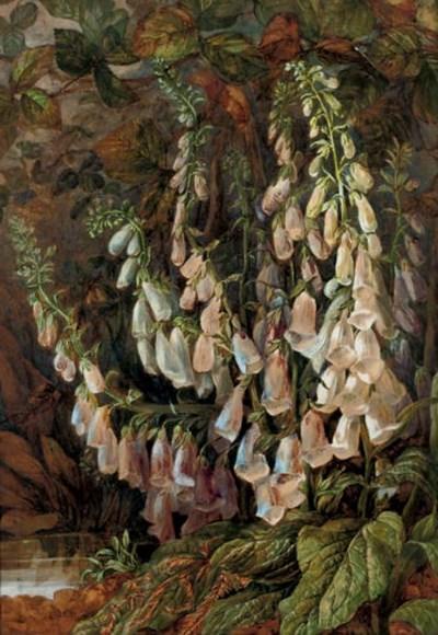 Maria Harrison (c.1857)